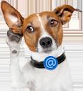 mail-image-dog.png